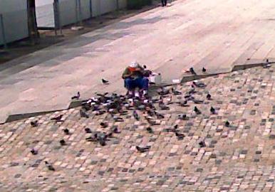 El hombre de las palomas...